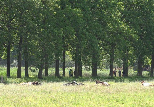 Landgoed Boekesteyn in 's-Graveland