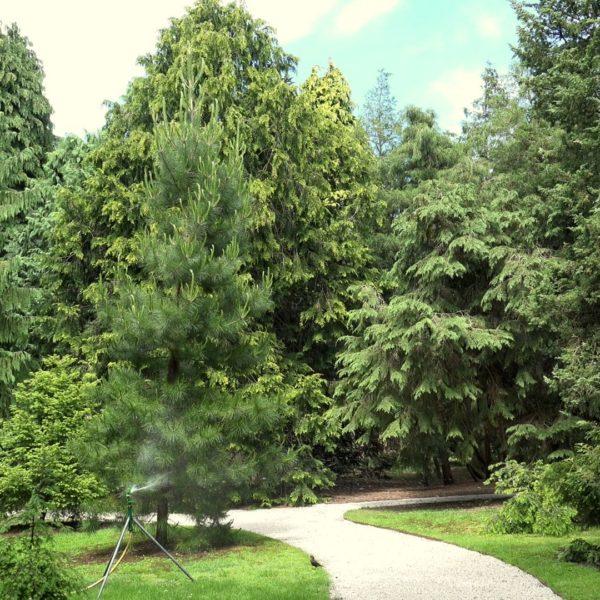 Pinetum Blijdenstein Hilversum