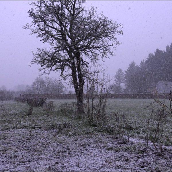 Sneeuw in Hummelo